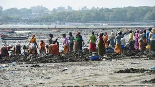Gönüllüler Hint Plajlarından 12.000 Ton Plastik Topladı