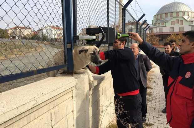 Korkuluklara Sıkışan Köpek, İtfaiye Tarafından Kurtarıldı