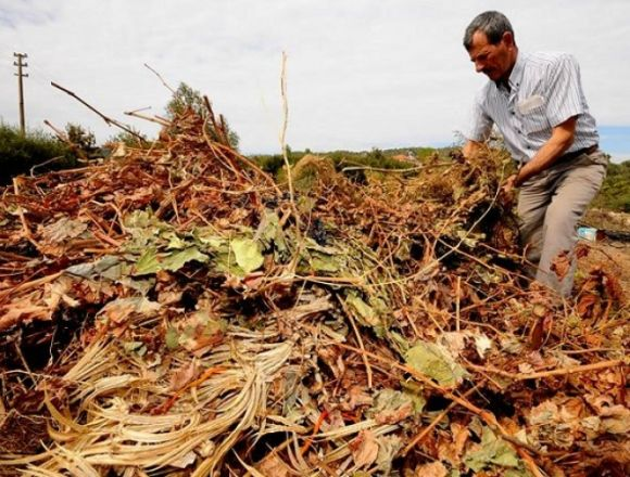 Tarımsal Atıklar Dönüştürülecek