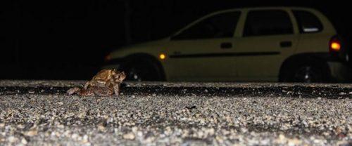 Kurbağalar İçin Tünel Talebi