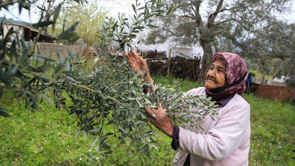 İşte Milas'ın En Yaşlı Çiftçisi