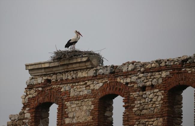 Tarihi Duvarın Kanatlı Misafirleri