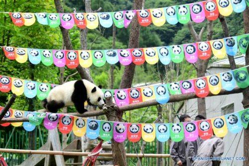 Pandalar İçin Doğum Günü