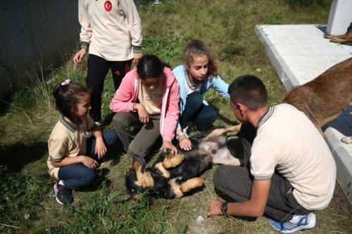 Sokak Köpekleri Okulun Maskotu Oldu