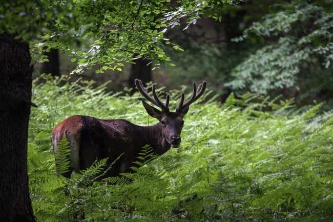 Belgrad Ormanı Tabiat Parkı'nda Doğal Hayat Canlandı