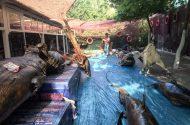 Türkiye'nin Tek Balıkçılık Müzesi Ziyaretçilerini Bekliyor