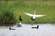 276 Kuş Türüyle Doğu'nun Kuş Cenneti