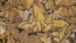 Ağrı'da Yaprak Fosili Bulundu