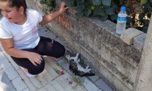 Can Çekişen Kediyi Gördü, Gözyaşlarına Boğuldu, Barınağı Aradı