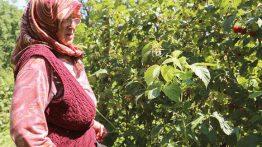 Yetiştirdiği Çilekleri Pazarda Satarak Aldığı Evi Çocuklara Bağışladı: Çilek Anne