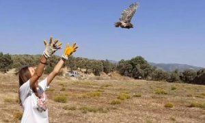 Tedavisi Tamamlanan Yavru Baykuş Doğaya Salındı