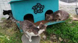 Sivas Belediyesi Sokak Hayvanlarının Besin Odaklarını Yeniledi