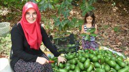 """Antalya'da 5 Yılda Kendi İşinin Patronu Oldu: """"Avokadocu Ayşe"""""""